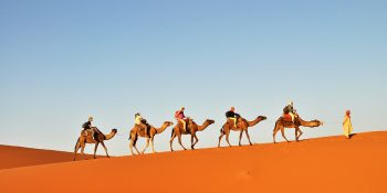 Camel Trips